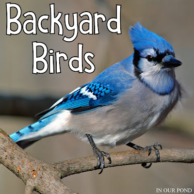 Montessori-Inspired Backyard Birds 3-Part Cards from In Our Pond