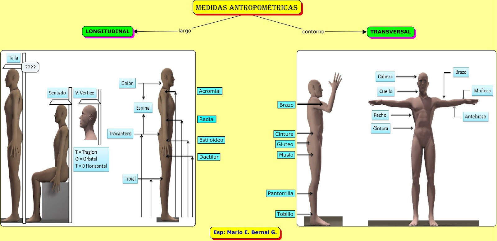 Q son las medidas antropometricas