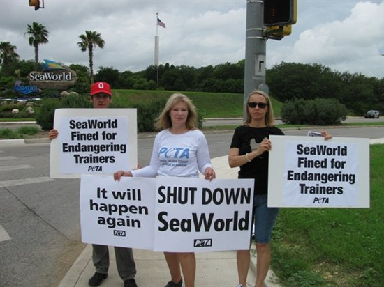 Incidents At Seaworld Parks: Vegan, Vegetarian, Animal Welfare News