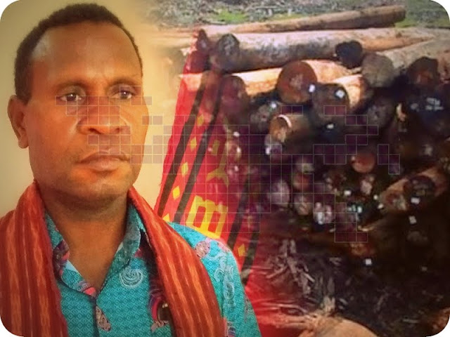 Lembaga Masyarakat Adat (LMA) Malamoi Dukung Penangkapan Pelaku Penebang Hutan