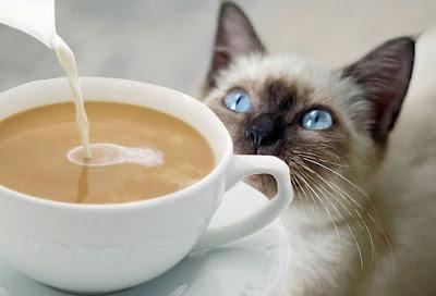 mèo và cà phê