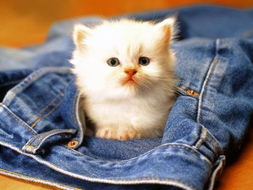 wallpaper bayi kucing yang bagus