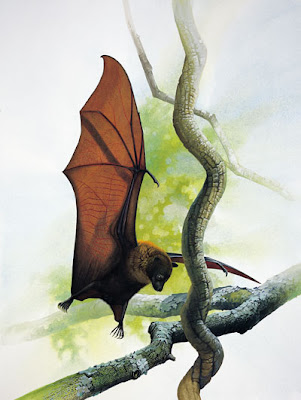 Guam flying fox