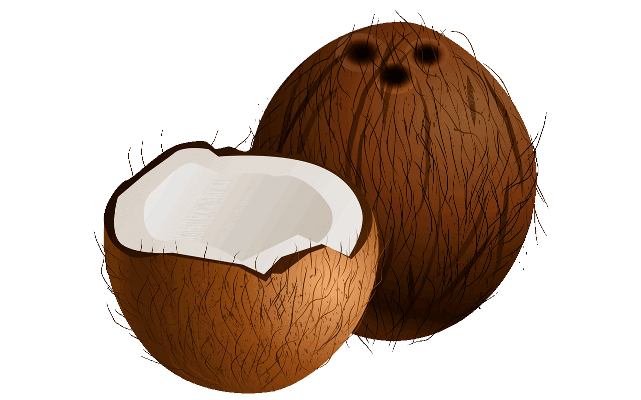 19 free shocking coconut clipart fruit names a z with coconut clip art free coconut clip art by panda