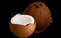 coconut clip art free download