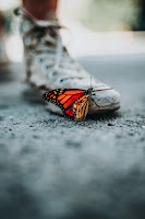 Close-up of a orange and black butterfly.It is sitting on someone's white high top sneaker. Photo by Nathan Dumlao on Unsplash.