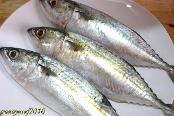mimisyafinie's space :): antara ikan selayang,ikan lolong dan ikan kembung :]
