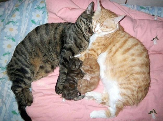 Funny cats - part 225, best cat pictures, cute cat pics, cat photos