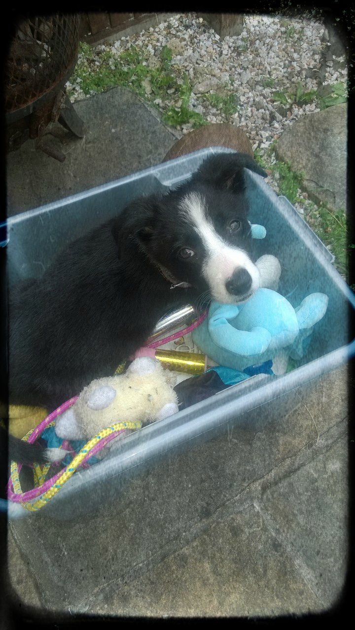 Mollie In The Toy Box