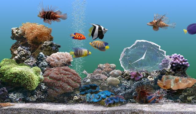 Chuyển hồ cá an toàn