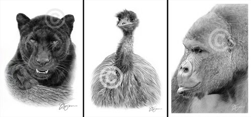 00-Gary-Tymon-Wildlife-and-Domestic-Animal-Pencil-Drawings-www-designstack-co