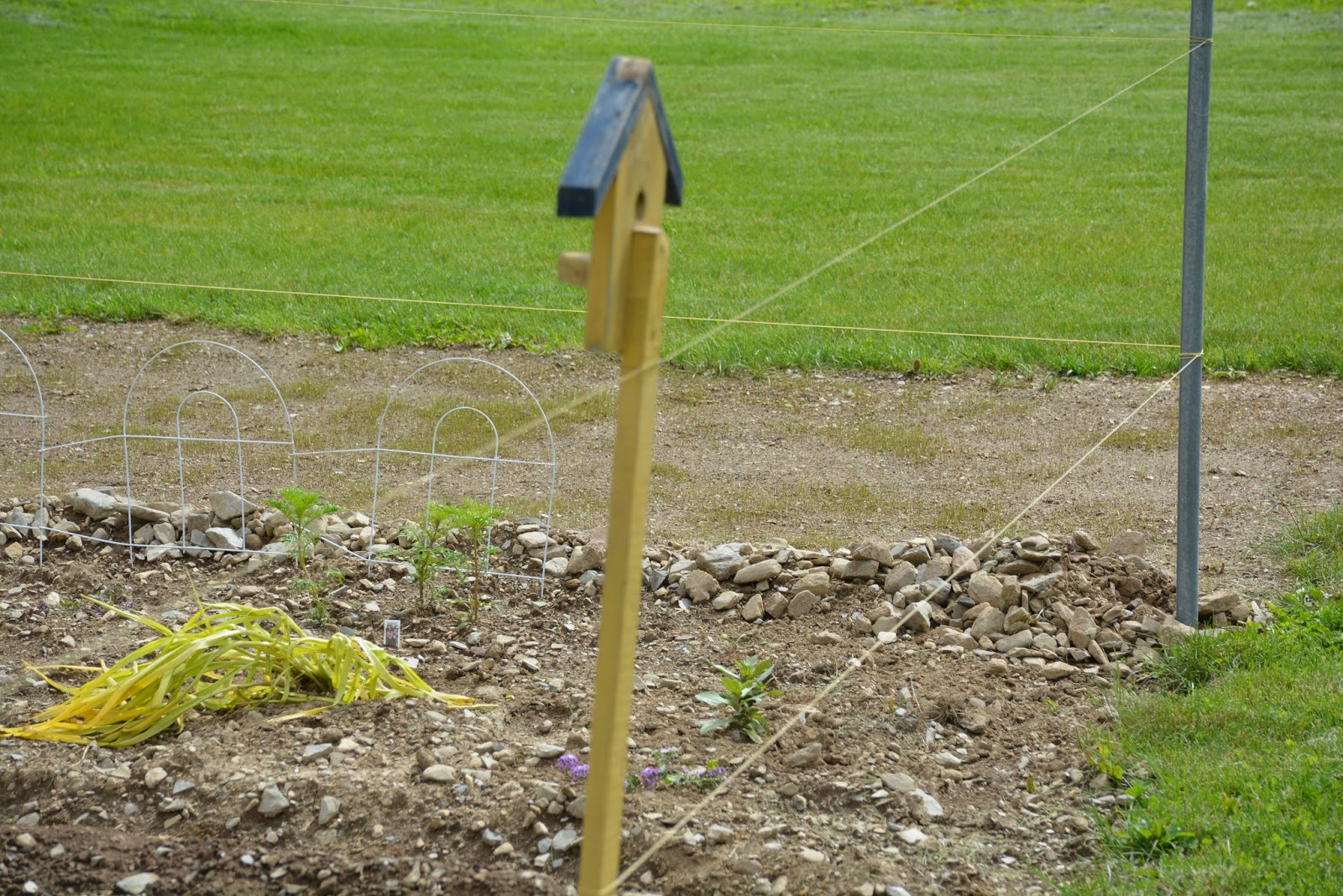 Playingwithmycamera the vegetable garden is in for Fishing line deer fence