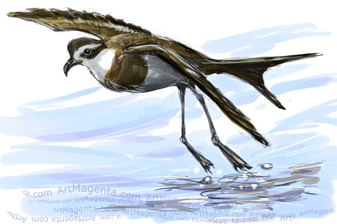 Storm Petrel  sketch painting. Bird art drawing by illustrator Artmagenta