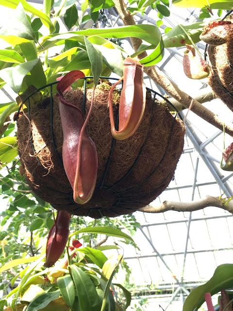 熱帯エリア ウツボカズラ ときわ公園、植物園もリニューアル。 プラントハンター西畠清順が手がける?