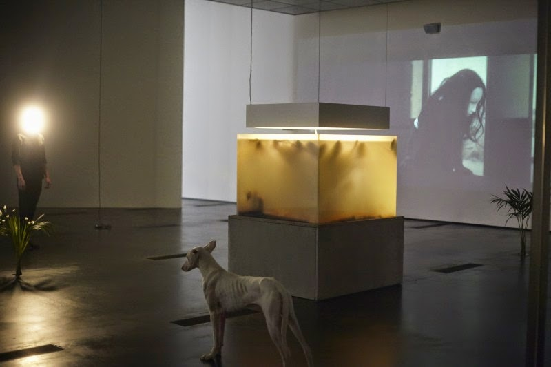 Installation photo of the exhibition, Pierre Huyghe,  at the Los Angeles County Museum of Art (LACMA), November 2014 - February 2015. © Pierre Huyghe. Photo by Ola Rindal