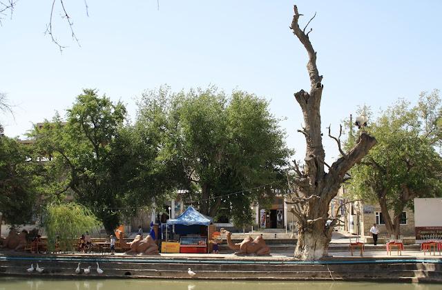 Ouzbékistan, Boukhara, Lyab-i Hauz, arbre mort, © L. Gigout, 2010