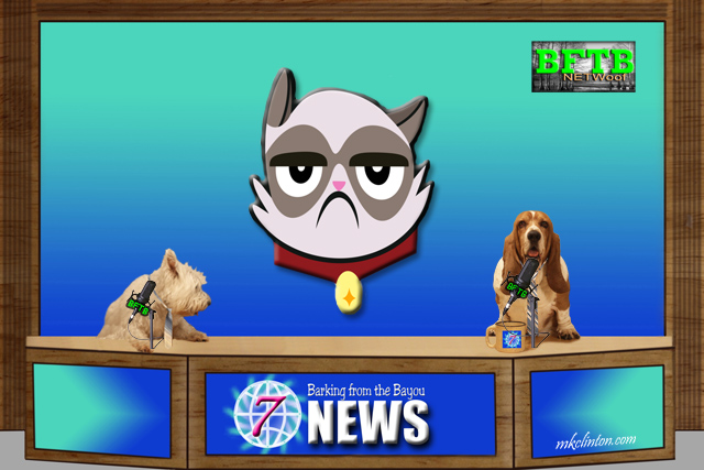 BFTB NETWoof News on Grumpy Cat