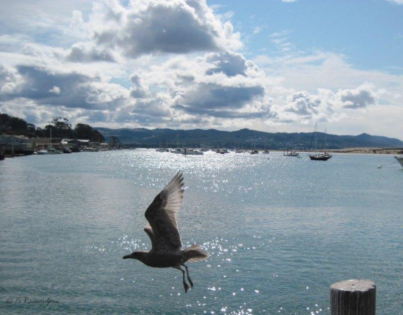 Ocean Photos from the California Central Coast