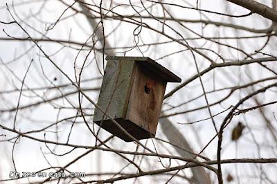 Caja nido en els Aiguamolls de l'Empordà