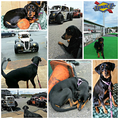 doberman mix rescue dog us legends racing