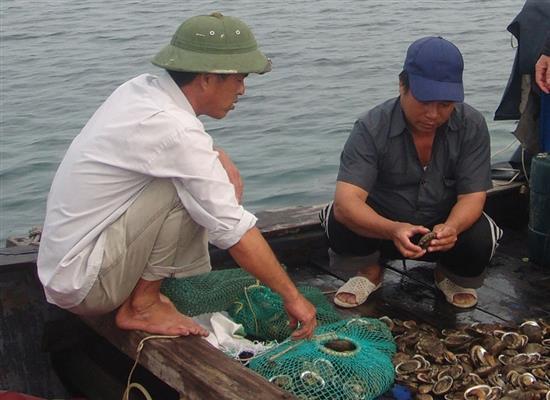 đánh bắt khai thác bào ngư Việt Nam ở Bạch Long Vĩ