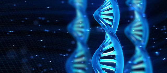 Informacion genetica, ADN y biologia