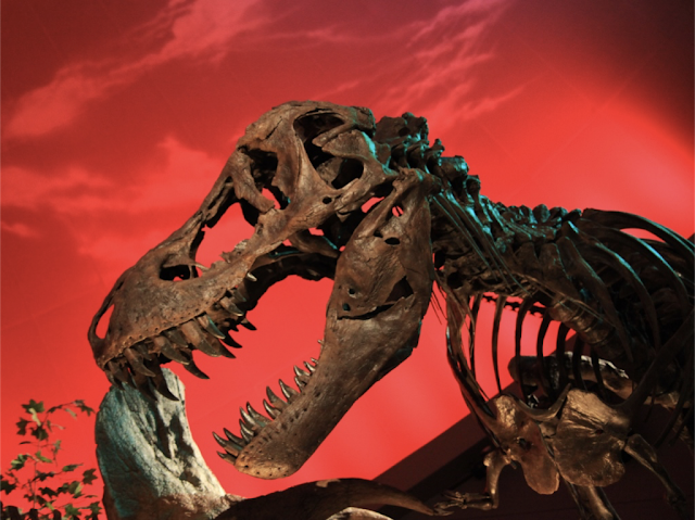 T. rex gets a protein shake-up – prehistoric collagen identified as modern contaminant