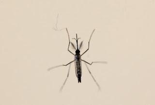 Vírus da zika pode se espalhar para Europa nos próximos meses, diz OMS