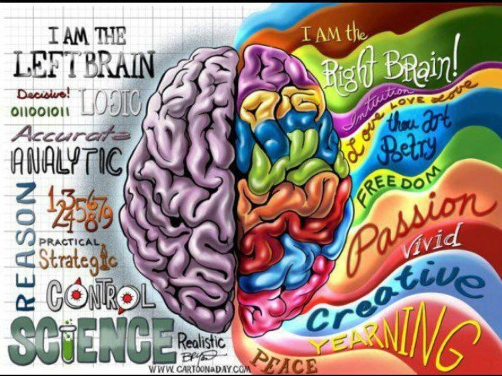funciones del cerebro · conlosochosentidos.es