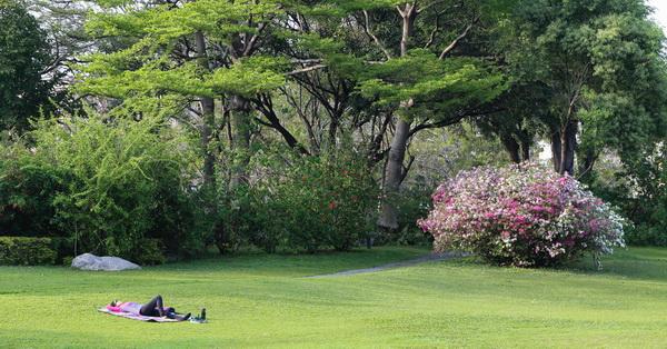 台中北區|台中科博館杜鵑花|還有一大片綠草原可以晒日光浴