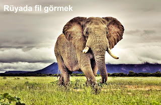 Rüyada fil görmek