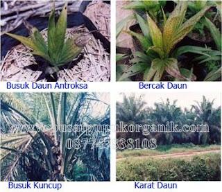 cara pengendalian hama dan penyakit kelapa sawit