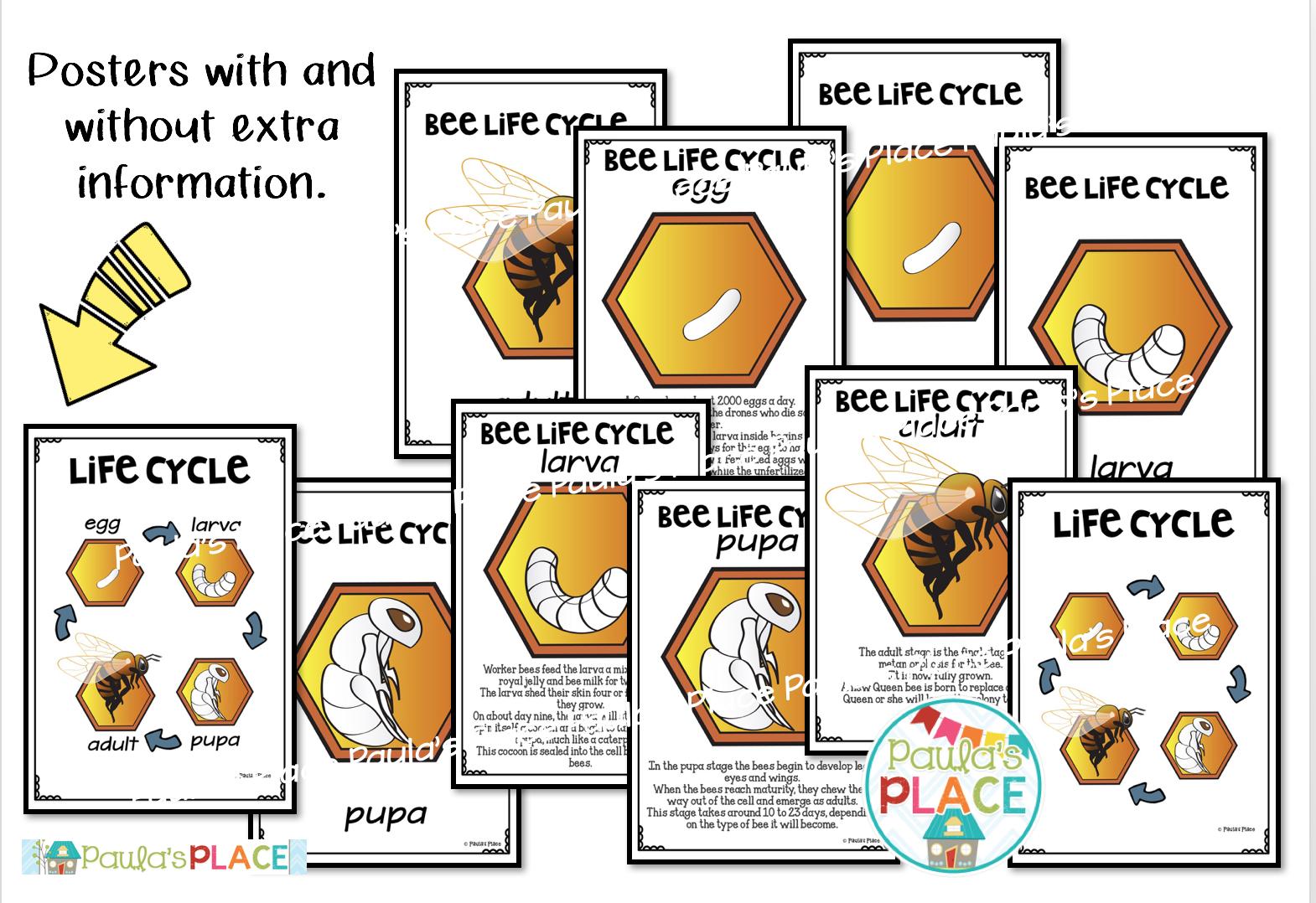Paula S Place Life Cycles