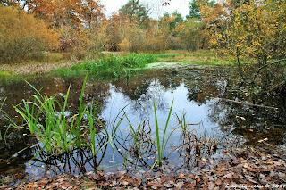 La mare aux Fées, Fontainebleau