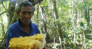 madu-sumbawa-lombok-berbusa