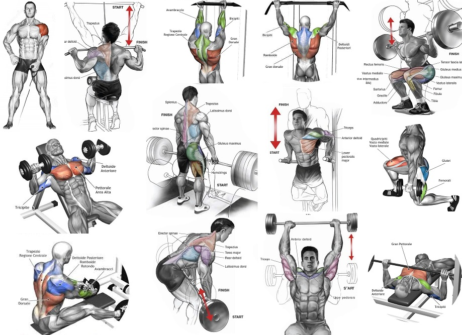 Top Muscle Building Workouts For Men - all-bodybuilding.com
