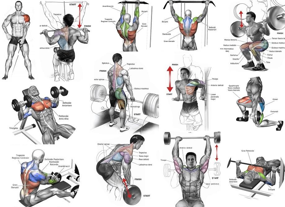 Best Mass Building Shoulder Exercises