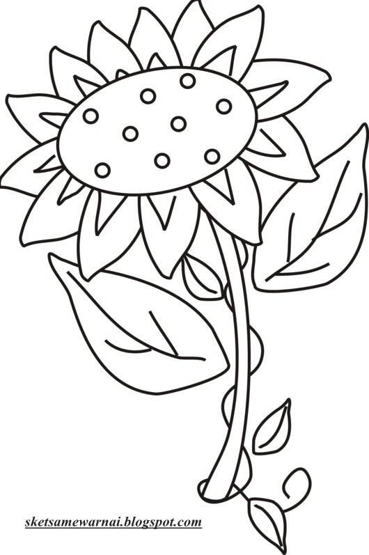 Gambar Bunga Matahari Untuk Diwarnai