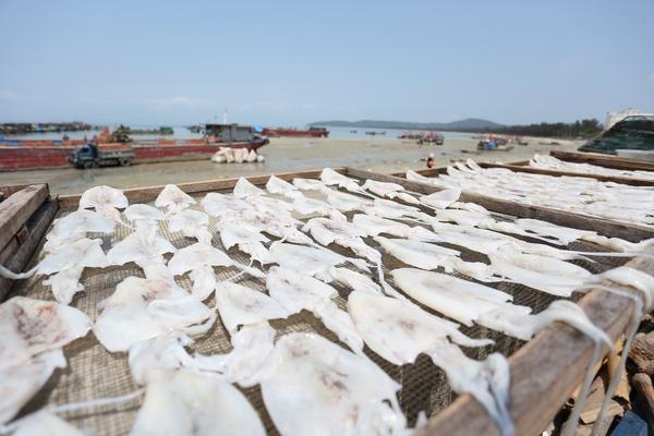 Mực khô - đặc sản biển Quan Lạn