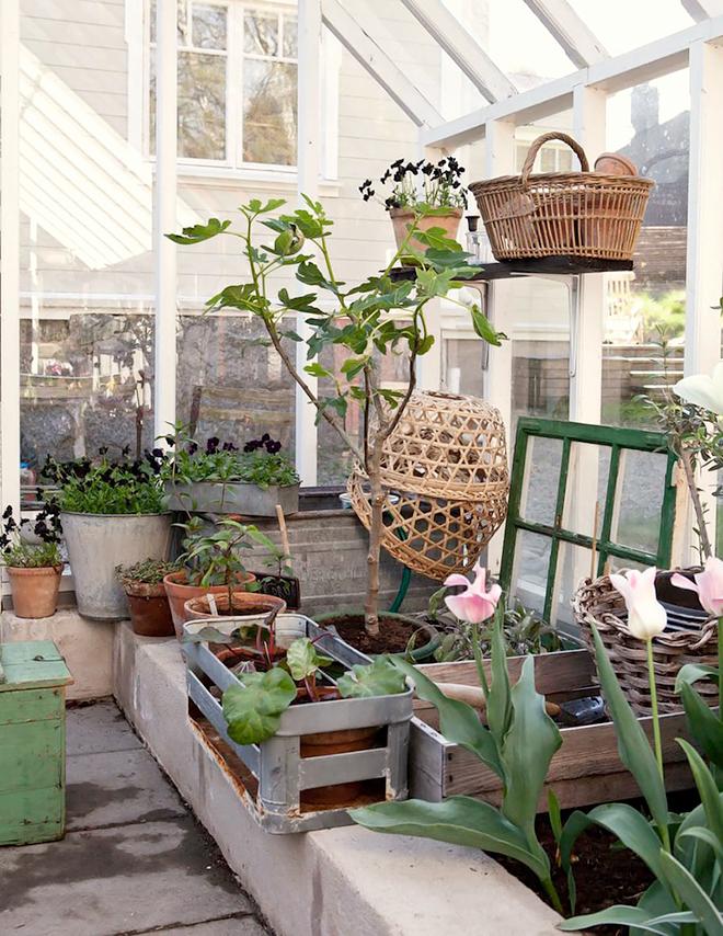 Harmony and design un invernadero en casa for Invernadero en casa