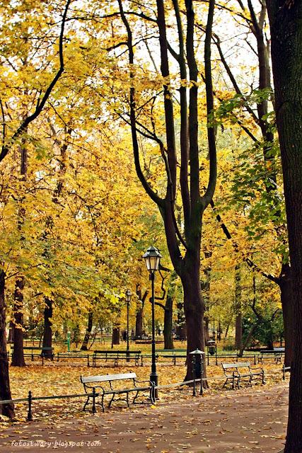 jesień, planty, autumn