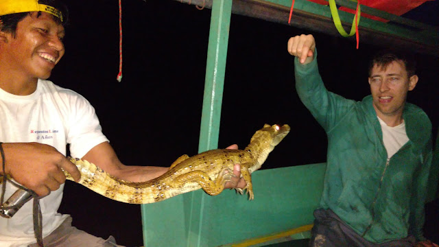 handling white caiman of the Amazon Rainforest