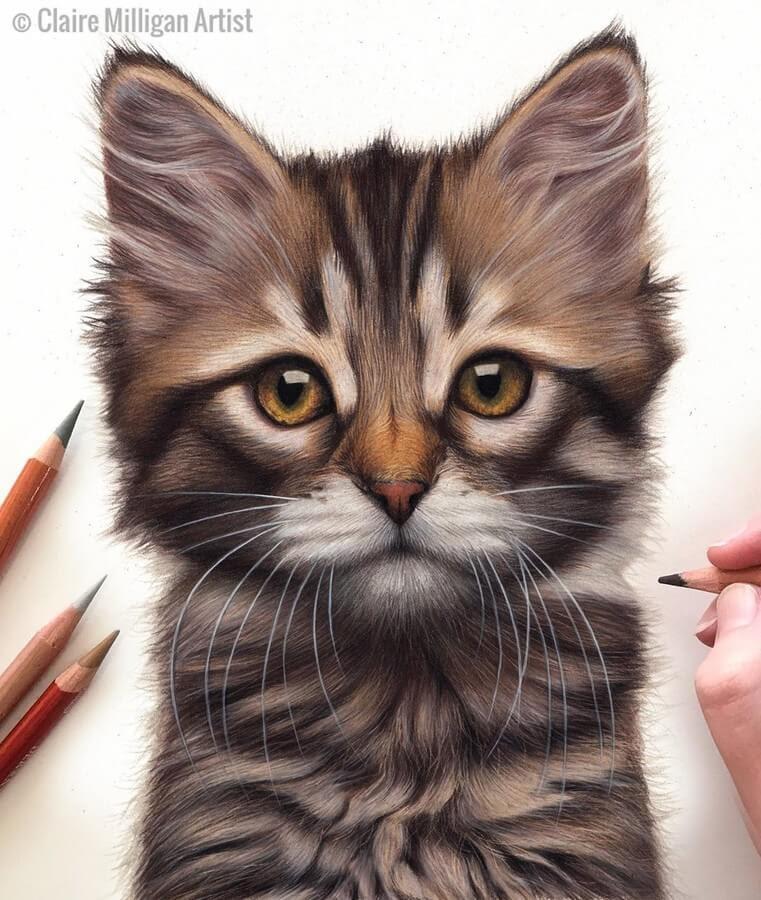 05-Kitten-Claire-Milligan-www-designstack-co