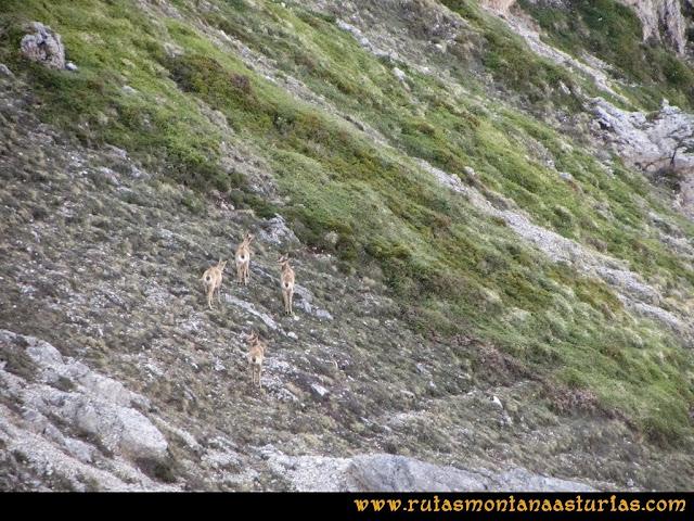 Ruta Farrapona, Albos, Calabazosa: Animales en el camino