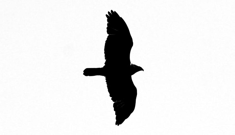 Utah Birders | Birding Blog, Utah Birds, Utah Birding, Utah Bird ID