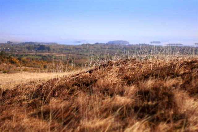 view towards Lough Corrib, dry grasses and blue sky