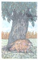 kratkoe-soderzhanie-moral-svinja-pod-dubom-krylov