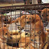 Why Can't Some Human Live Without Dog Meat?