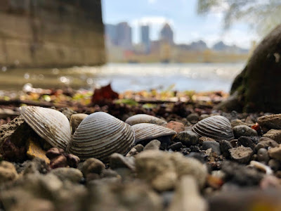 invasive Asian Clams in Pittsburgh
