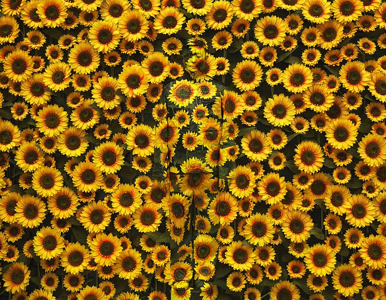 18-Sunflower-Liu-Bolin-Find-The-Painted-Invisible-Man-www-designstack-co